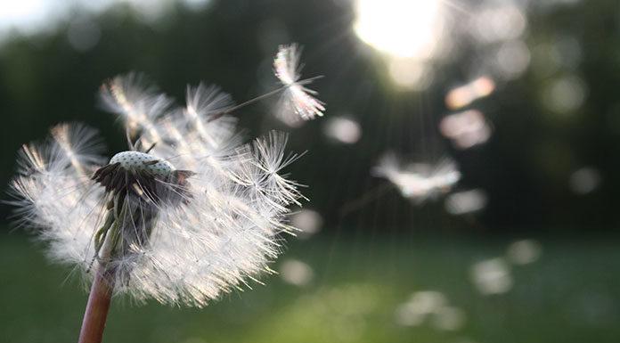 Jak radzić sobie z uciążliwymi objawami alergii podczas pylenia traw?