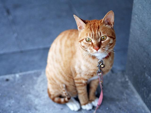 ile kosztuje kastracja kota